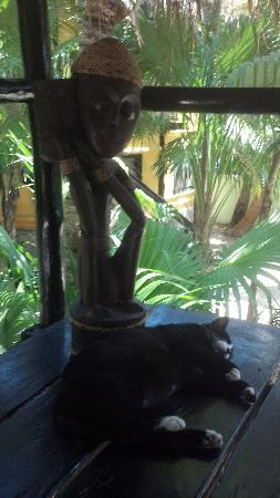 Las Palmas Maya: resident happy cat