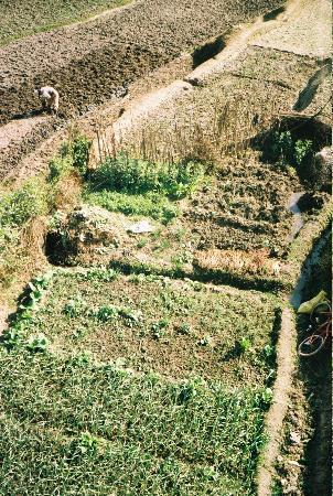 Homestay Nepal: Babus garden from above. Filled with garlic at the moment.