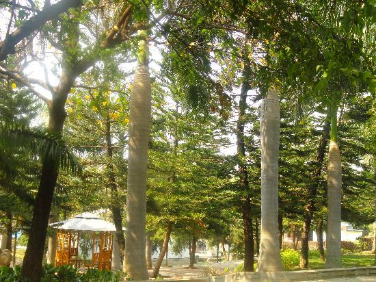 Pragati Resorts: Green view inside the resort