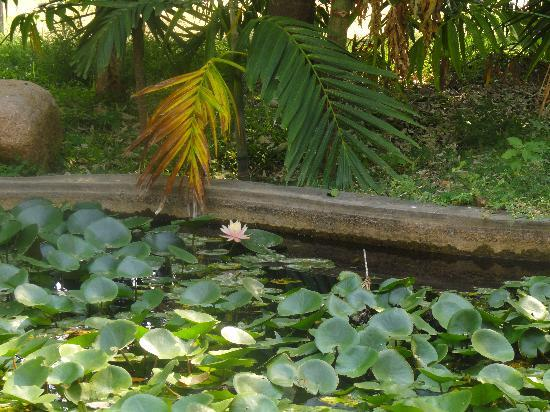 Pragati Resorts: Lotus pond inside the resort
