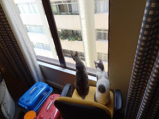 Radisson Hotel Curitiba: Os Gatitos adoraram a vista !