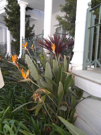 Marina Turquesa: Bird of Paradise Flowers by the pool