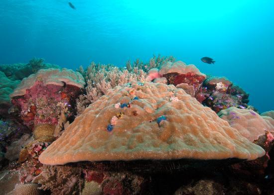 科斯雷鸚鵡螺渡假村照片