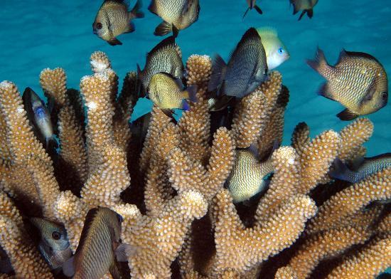 Kosrae Nautilus Resort: Kosrae Reef