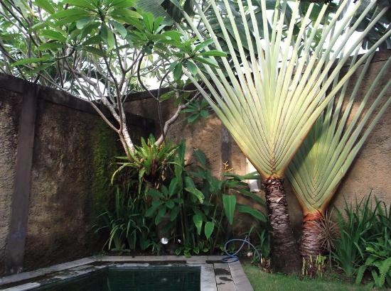 Villa Orchid Bali: Pool view