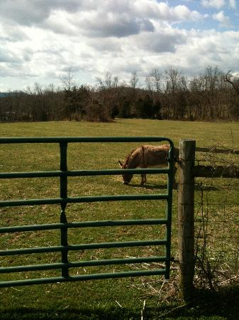 Fox Hill Bed & Breakfast Suites: Owners' cute donkey
