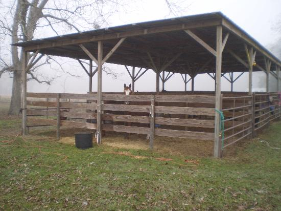 ‪‪McCulley Farm‬: 2 outside stalls areas / panels in other chicken houses‬