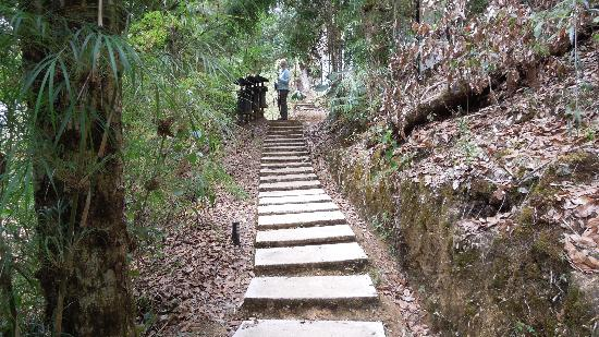 Dantica Cloud Forest Lodge: The dreaded steps!