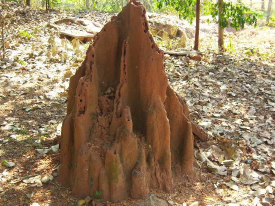 Camp Leopard Rock: Termite World ??