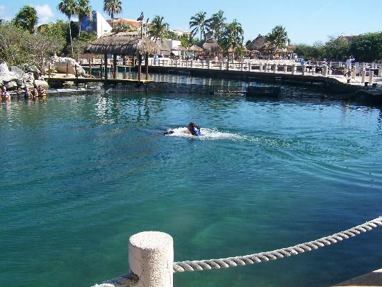 Bassins pour les dauphins photo de puerto aventuras for Nager avec les dauphins nice
