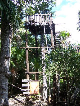 Pont suspendu picture of jardin botanico dr alfredo for Jardin suspendu