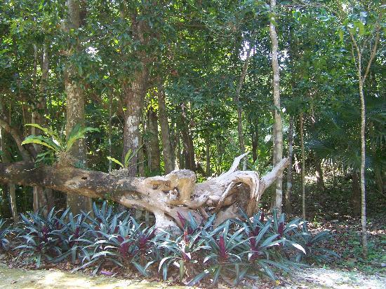 Jardin Botanico Dr. Alfredo Barrera Marin: Épiphytes, végétal qui vit sur une plante