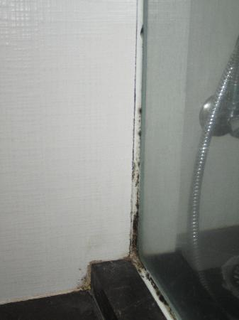 Urbana Langsuan: MOLD in shower