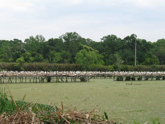 Jungle Gardens: Bird Sanctuary
