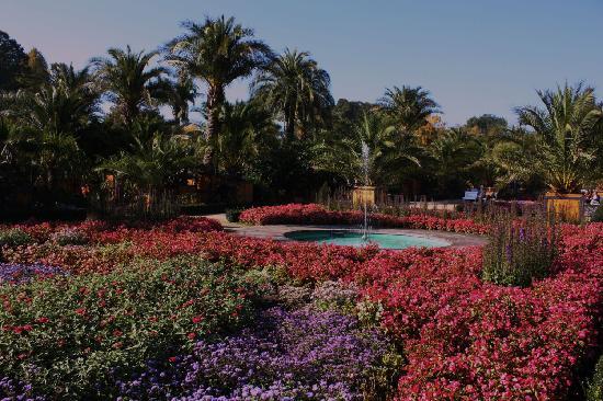Bad Pyrmont Kurpark: Palmengarten