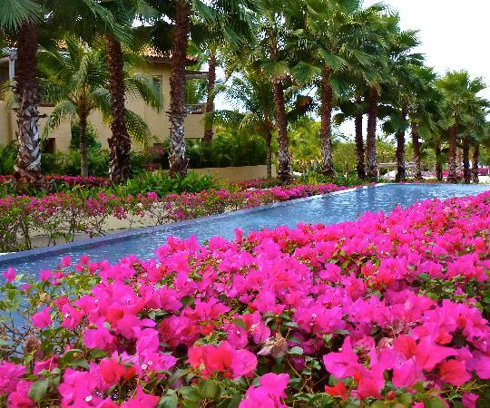 The St. Regis Punta Mita Resort: Remarkable bougainvillea gardens, all over the property.