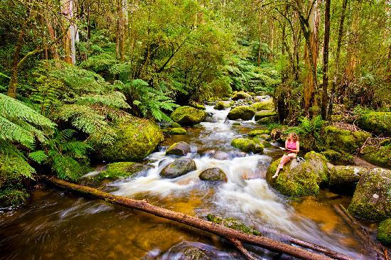 Brandy Creek, Australia: Near Toorongo Falls