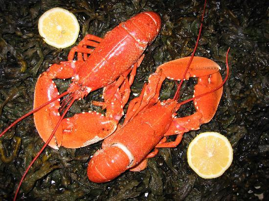 the waterfront cafe: Fresh Local Lobsterl
