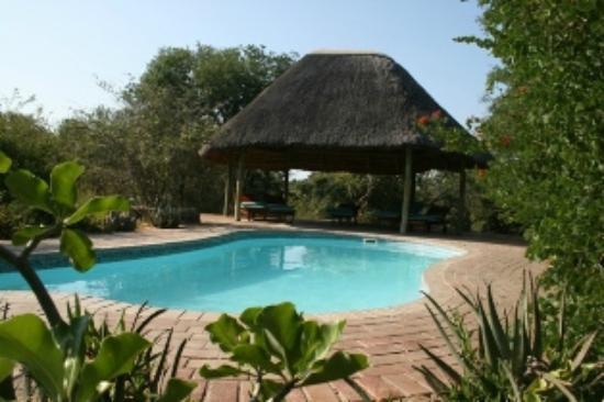 Tshukudu Bush Camp: Swimming Pool