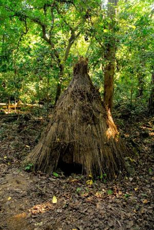 Coast Province, Kenya: untroubled ecosystem