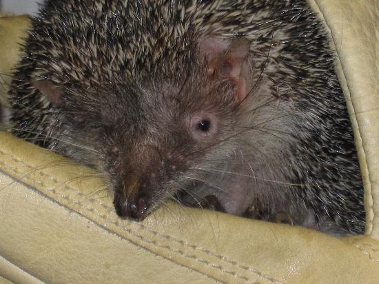 Denver Zoo: Met a Hedgehog!