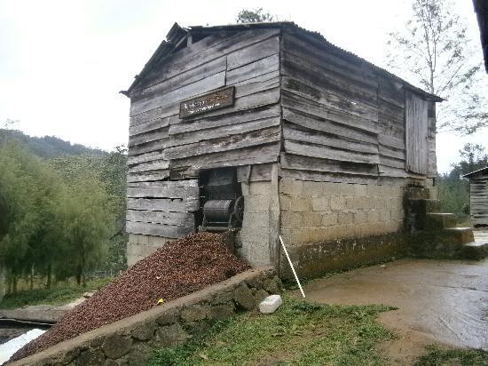 Estancia Natura at Spirit Mountain: working the coffee