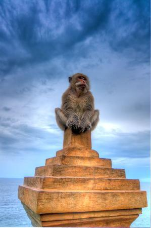 Pecatu, Indonesia: Bad Monkey