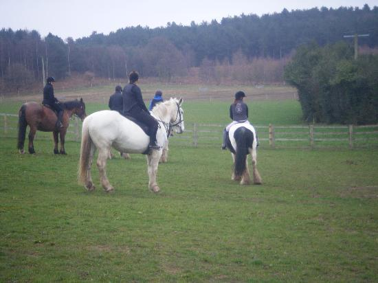 Cannock Chase Trekking Centre: Some more horses