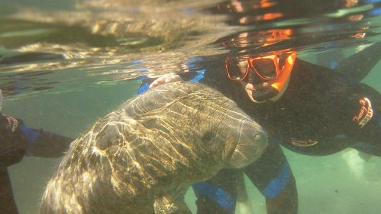 Sunshine River Tours - Crystal River Manatee Tours: Enjoying the attention