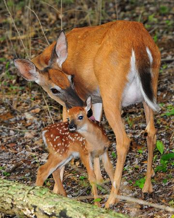 Radnor Lake State Park : Mother and newborn