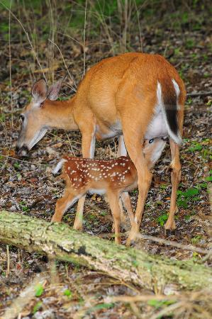 Radnor Lake State Park: Mother and newborn1