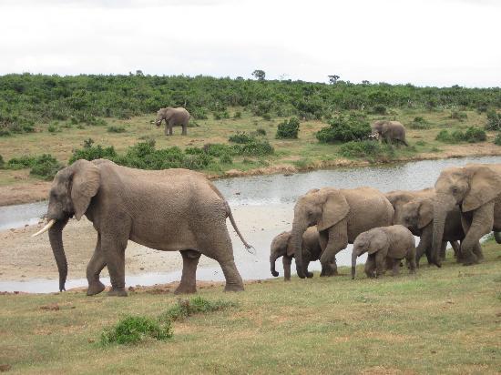 Schotia Safaris Private Game Reserve: Addo