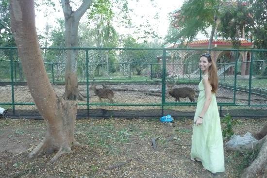 The Regent Cha Am Beach Resort: deer dear!