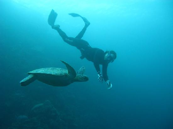Element Freedive: See some turtles here too.