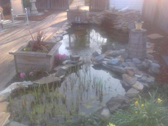Carol's Garden Inn: The fish pond