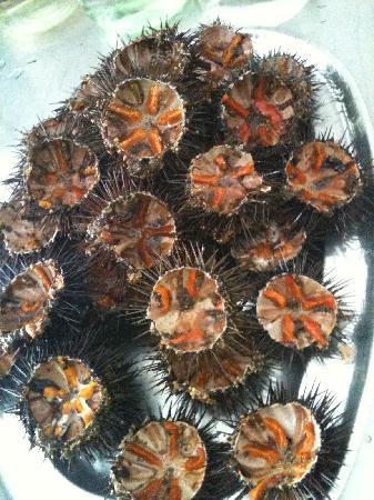Mediterraneo Taverna Ouzerie: Sea urchins