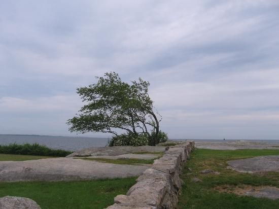 Fort Phoenix State Reservation: View of Tree
