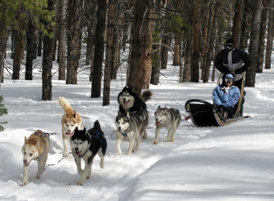 Dog Sledding Breckenridge Reviews