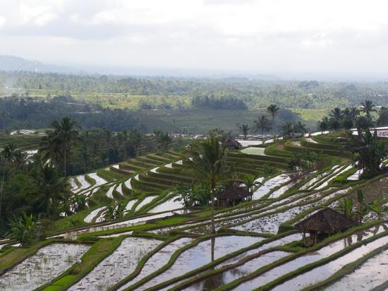 บาหลี, อินโดนีเซีย: superb Tabanan