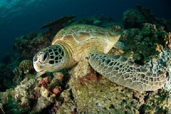 turtles Gili Meno