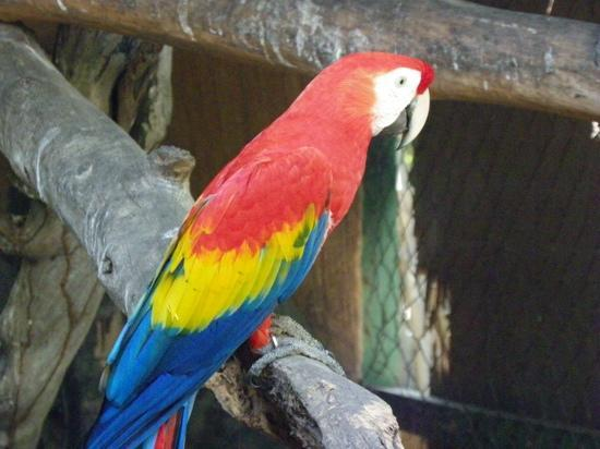 Gili Meno, Indonesia: Meno bird park