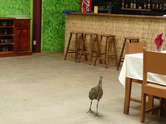 """Samoa Lodge & Resort Tortuguero: """"bébé"""" dans la salle à manger"""