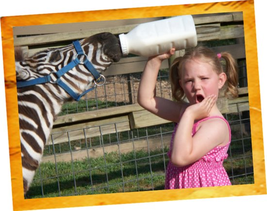 Eagle Rock, MO: Bottle Feed a Zebra!
