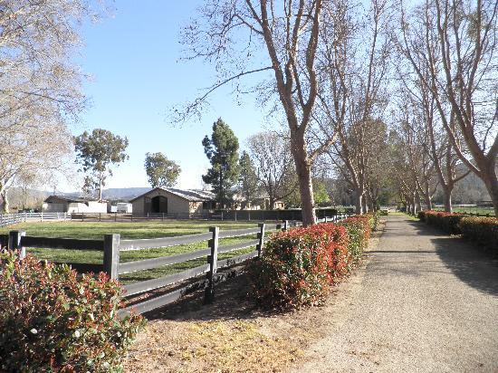Stagecoach Wine Tours Santa Ynez: The livery yard where we had lunch