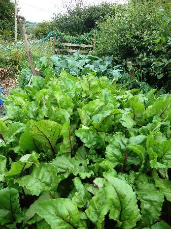 Cerenety Eco Camping: Pick your own vegetable patch at Cerenety