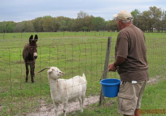 The Smoakhouse Ranch: How could anyone pass up these friendly animals?