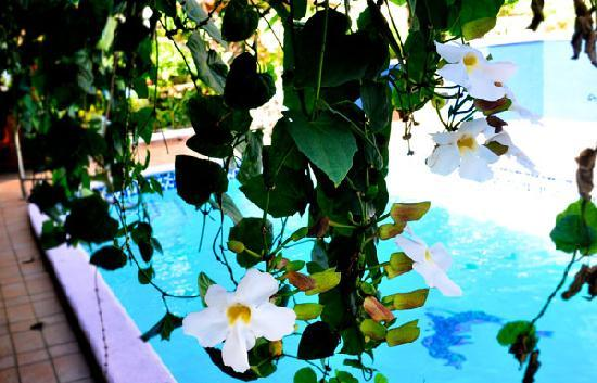 Casa Ramirez: Pool