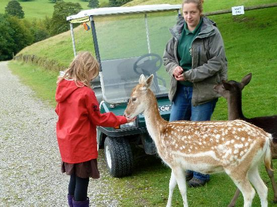 Chestnut Centre Otter, Owl and Wildlife Park: In the deer park with Keeper