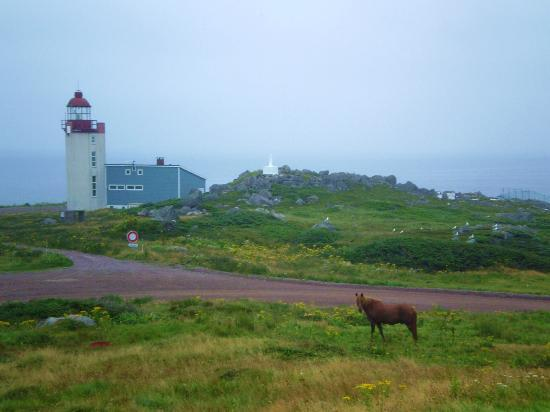 Saint-Pierre and Miquelon: While on an Early Morning Jog