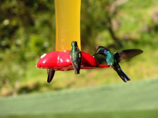 Trogon Lodge San Gerardo de Dota: loved watching the hummingbirds at the feeders